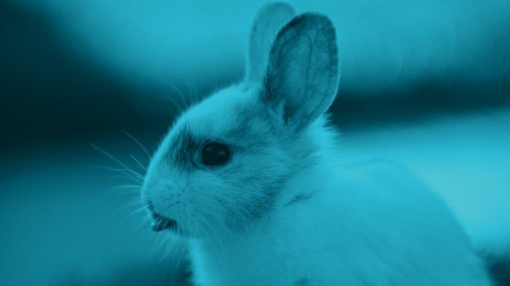 coniglio non mangia cosa fare