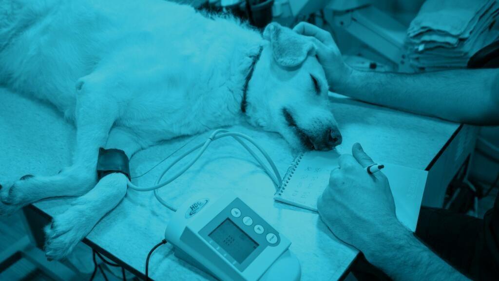 emangiosarcoma nel cane e gatto
