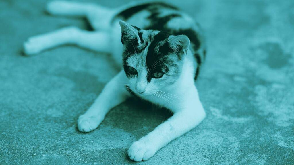 Dermatite miliare Felina