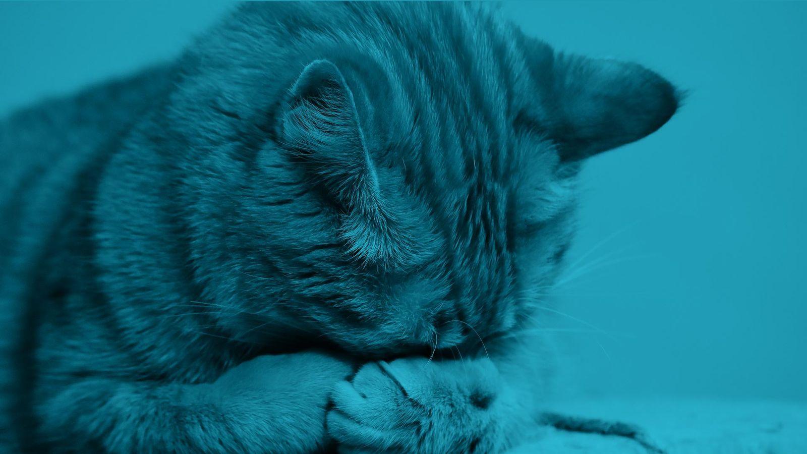 Nefrologia e urologia cani e gatti BluVet