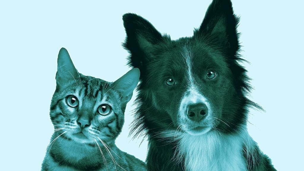 Malassezia cane gatto