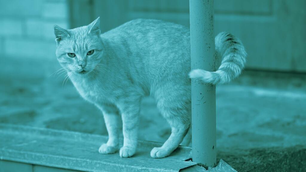 Micosi o tigna del gatto
