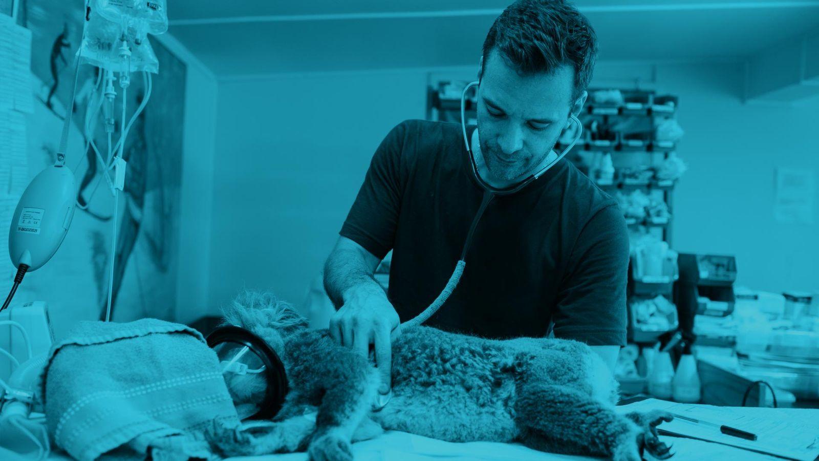 anestesia veterinaria