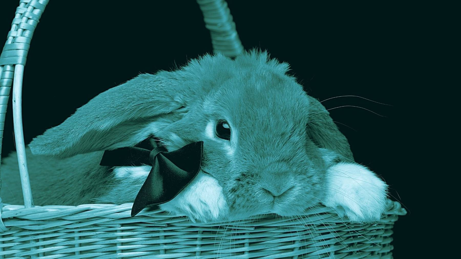 cibi pericolosi per il coniglio