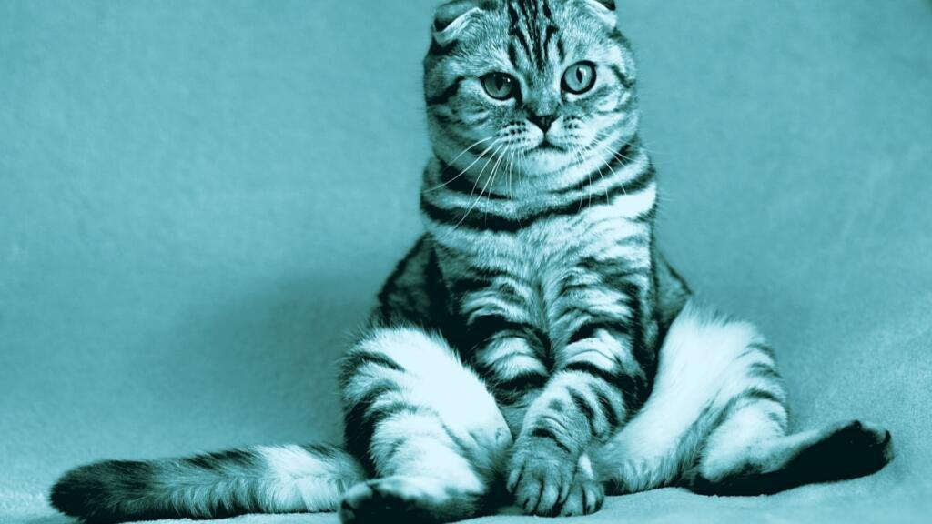 ostruzione urinaria del gatto