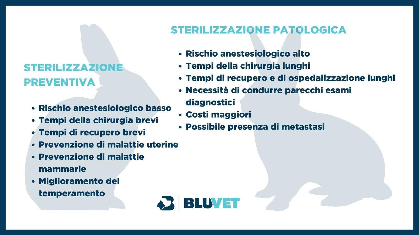 sterilizzazione nel coniglio quale conviene
