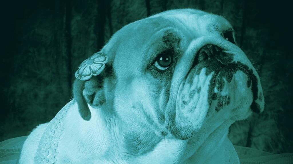 tumore mammario nel cane femmina