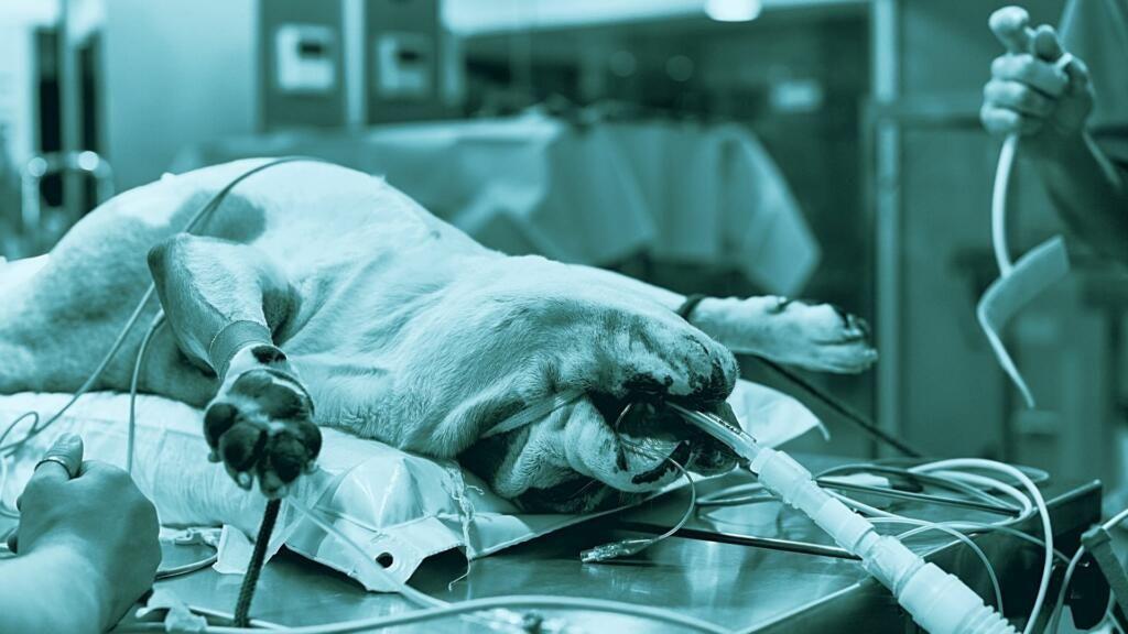anestesia gassosa veterinaria