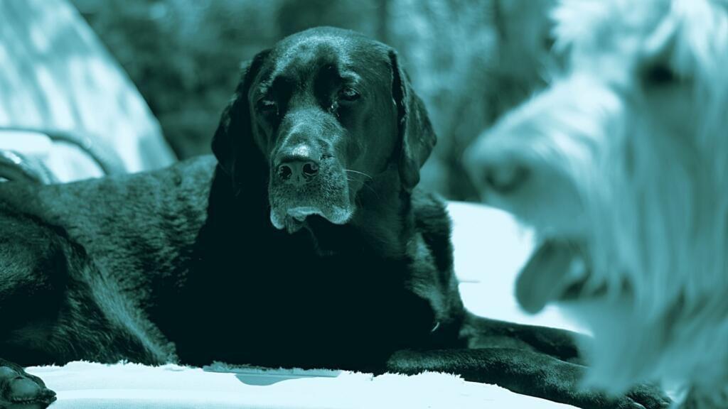 come rinfrescare il cane al caldo