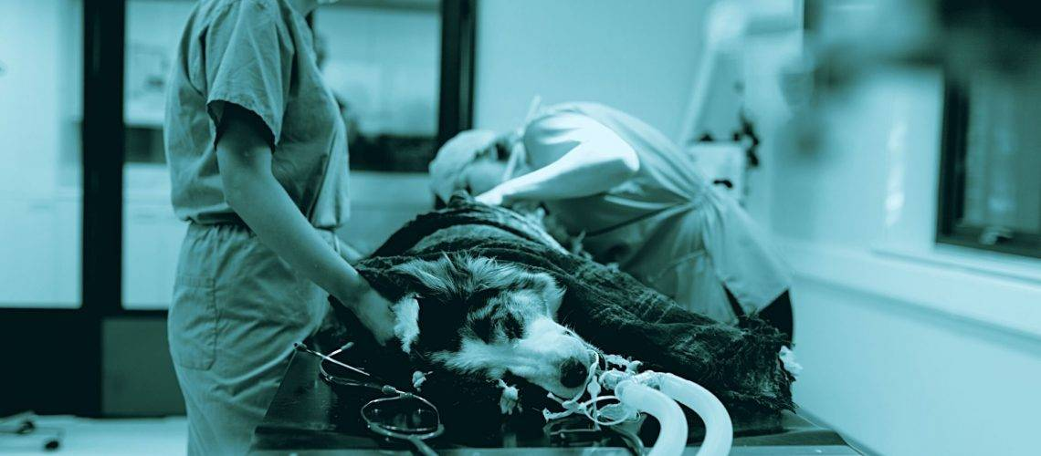 Come prevenire le infezioni nelle strutture veterinarie