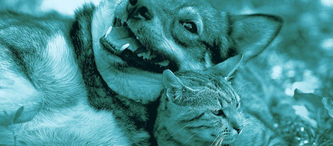 Malattie autoimmuni nel cane e gatto