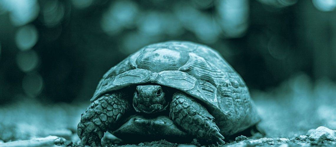 problemi respiratori delle tartarughe